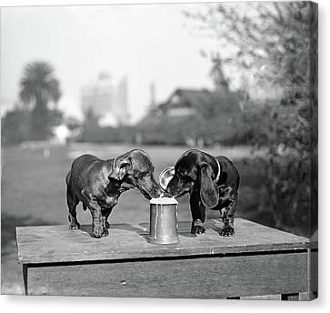 Stein Canvas Print - 1890s Two Dachshund Puppies Lapping by Vintage Images