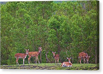 India, West Bengal, Sunderbans National Canvas Print