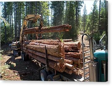 Logging Redwood Trees Canvas Print
