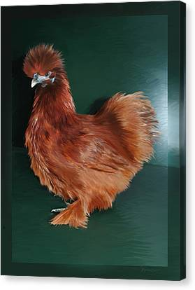 19. Red Silkie Hen Canvas Print