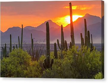 Usa, Arizona, Saguaro National Park Canvas Print by Jaynes Gallery