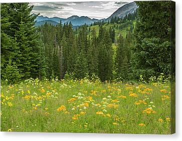 Usa, Colorado, Gunnison National Forest Canvas Print by Jaynes Gallery