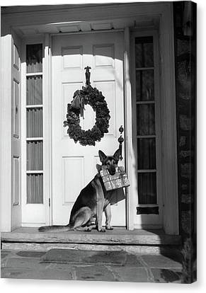 Dog At Door Canvas Print - 1930s German Shepherd Dog Sitting Front by Vintage Images