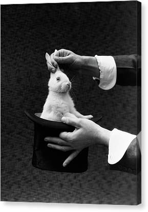 Black Top Canvas Print - 1930s Magician Hands Pulling Rabbit by Vintage Images