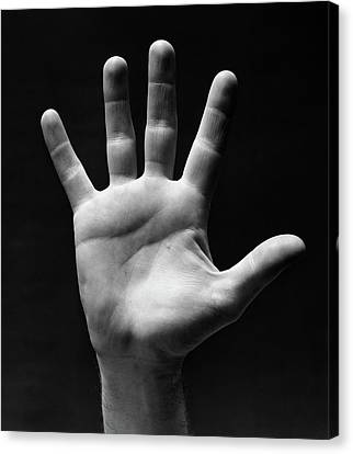 Lifeline Canvas Print - 1930s Palm Of Mans Hand Gesture Of Stop by Vintage Images