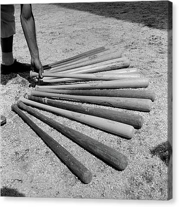 Selecting Canvas Print - 1950s Baseball Player Selecting by Vintage Images