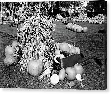 Local Food Canvas Print - 1950s Dried Corn Stalks Surrounded by Vintage Images