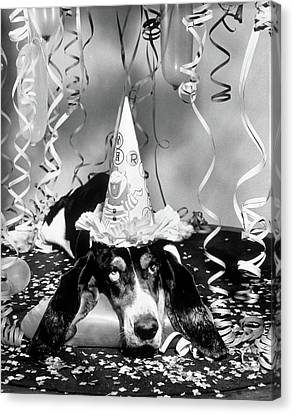 Happy New Year Canvas Print - 1950s Funny Basset Hound Wearing Party by Vintage Images