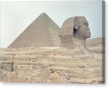 Pharaoh Canvas Print - 1950s Great Pyramid Of Giza by Vintage Images