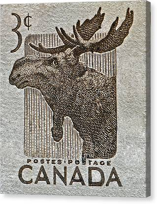 1953 Canada Moose Stamp Canvas Print
