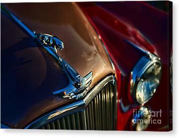 1953 Jaguar Mk7 Canvas Print by Paul Ward