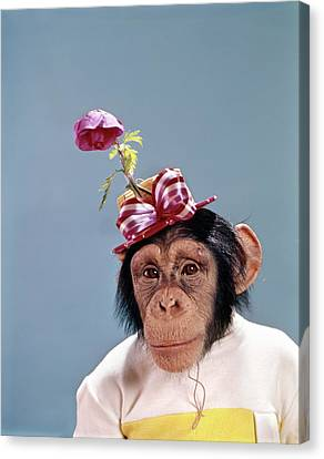 Blue monkey simian summer dresses