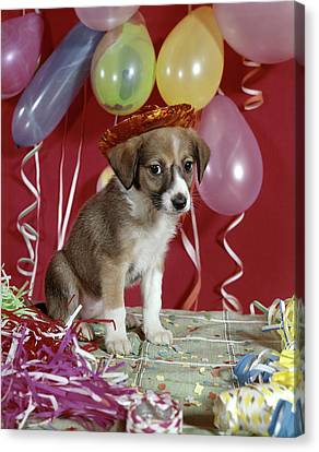 Happy New Year Canvas Print - 1960s Sad Puppy Wearing Party Hat by Vintage Images