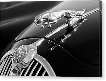 1964 Jaguar Mk2 Saloon Hood Ornament And Emblem Canvas Print by Jill Reger