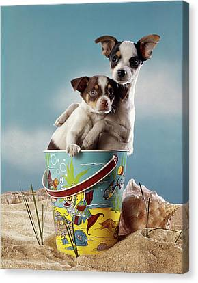 Beach Pails Canvas Print - 1970s Two Miniature Dogs Chihuahua by Vintage Images