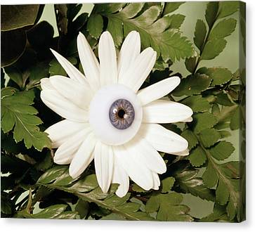 Old Blue Eyes Canvas Print - 1970s White Flower Daisy With Eyeball by Vintage Images