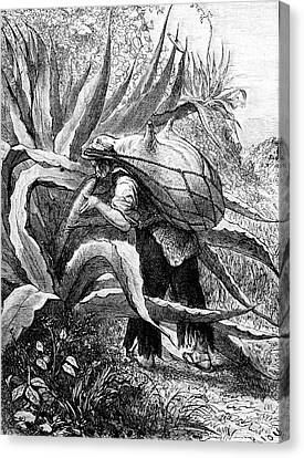 19th Century Agave Harvest Canvas Print by Collection Abecasis