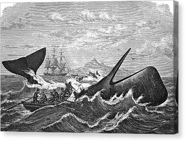 19th Century Whale Hunt Canvas Print