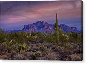 A Beautiful Desert Evening  Canvas Print