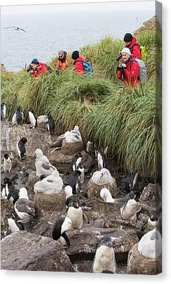 Albatross Canvas Print - A Black Browed Albatross by Ashley Cooper