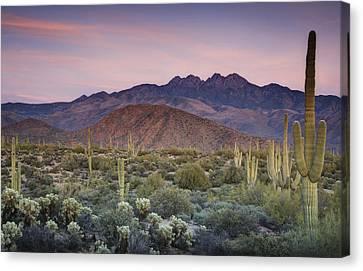 A Desert Sunset  Canvas Print