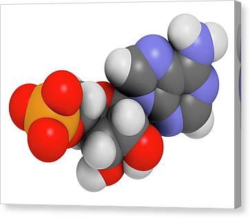 Adenosine Monophosphate Molecule Canvas Print by Molekuul