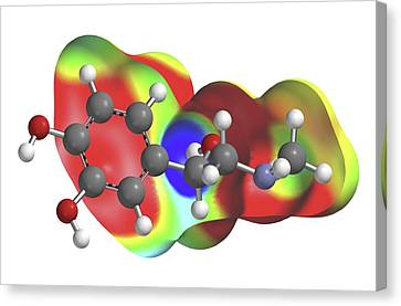 Adrenaline Molecule Canvas Print by Alfred Pasieka