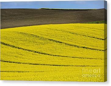 Plowed Fields Canvas Print - Agricultural Landscape.  by Bernard Jaubert