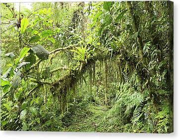 Amazonian Cloud Forest Canvas Print by Dr Morley Read