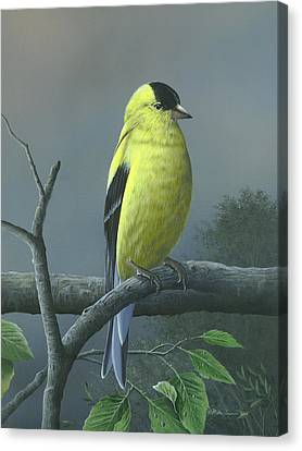 Canvas Print featuring the painting American Goldfinch by Mike Brown