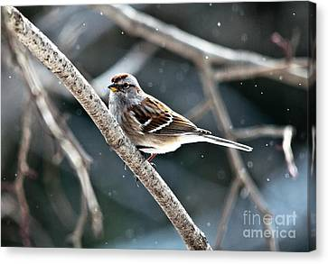 American Tree Sparrow Canvas Print by Cheryl Baxter