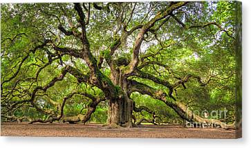Live Oaks Canvas Print - Angel Oak Tree Of Life by Dustin K Ryan
