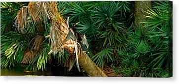 Anhinga Anhinga Anhinga On A Tree Canvas Print by Panoramic Images