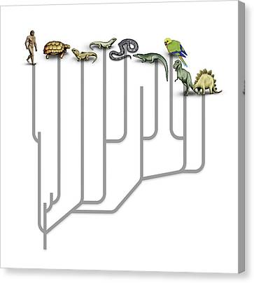 Animal Family Tree Canvas Print by Mikkel Juul Jensen