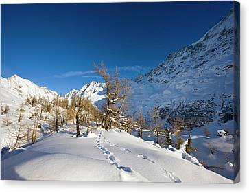 Animal Tracks In Deep Snow In Winter Canvas Print by Martin Zwick