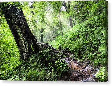 Canyon Country Canvas Print - Appalachian Trail by Debra and Dave Vanderlaan
