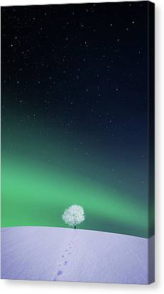 Apple Canvas Print by Bess Hamiti
