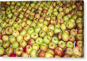 Apples Canvas Print by Steven Ralser