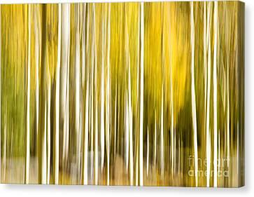 Aspen Glow Canvas Print by Bryan Keil