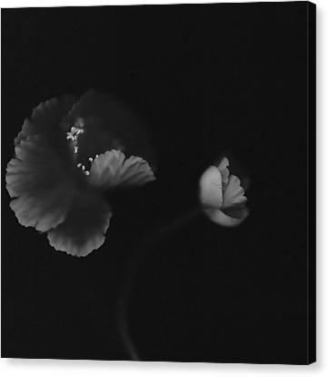 Autographic Poppies Canvas Print