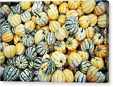 Autumn Gourds Canvas Print by Crystal Hoeveler