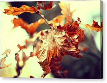 Autumn Leaves Canvas Print by Jenny Rainbow