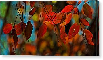 Canvas Print featuring the photograph Autumn Magic by John Harding