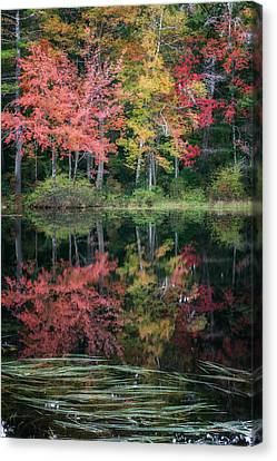 Autumn Pond Canvas Print by Bill Wakeley