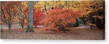 Autumn Trees In Westonbirt Arboretum Canvas Print by Panoramic Images