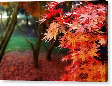 Autumnal Forest Canvas Print by Les Cunliffe
