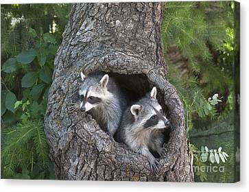 North American Wildlife Canvas Print - Awaiting Mom by Sandra Bronstein