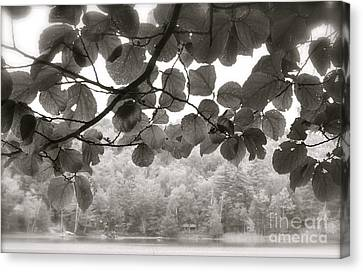 Canvas Print featuring the photograph Balance Of Nature by Paul Cammarata