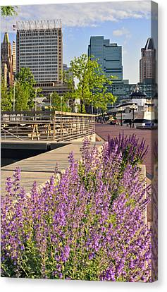 Canvas Print featuring the photograph Baltimore Spring Flowers by Marianne Campolongo