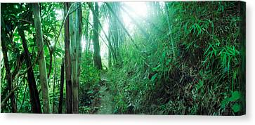 Bamboo Forest, Chiang Mai, Thailand Canvas Print by Panoramic Images